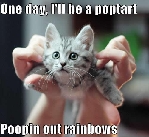 rainbows and kittens bitches
